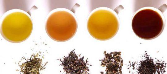 3 loại trà để pha trà sữa cơ bản nhất