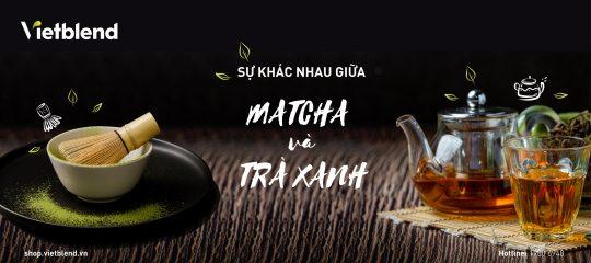 Bột Matcha và Bột Trà xanh có gì khác nhau?